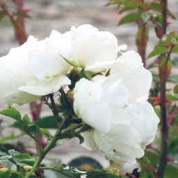 photography nature flower white