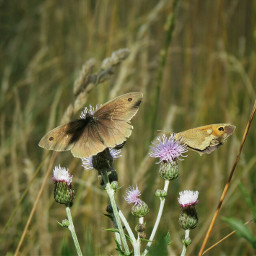 butterfly insect naturephotography nature summer
