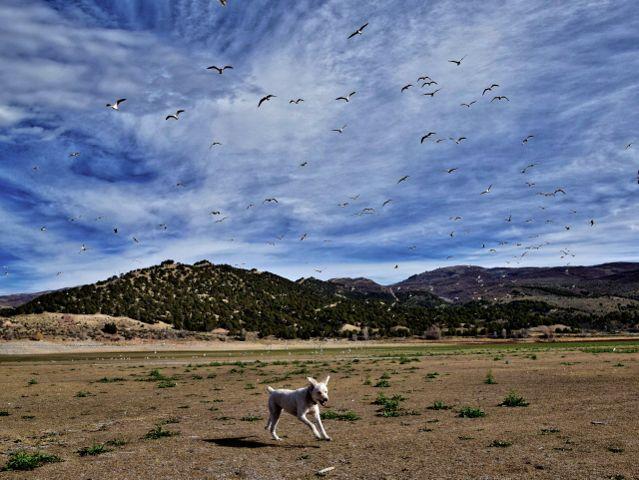 #nature,#landscape,#lakebed,#birds,#dog,#freetoedit